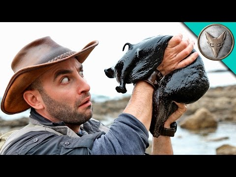Wilderness Expert Coyote Peterson Picks Up a Giant Black