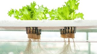 Greenway Hydroponic Farm Video