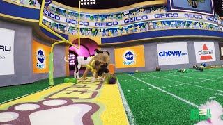 Puppy Bowl XIV's Winning Touchdown by Animal Planet