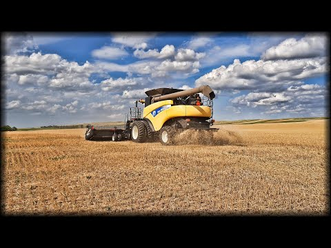 Harvesting cereals, feeding hoppers