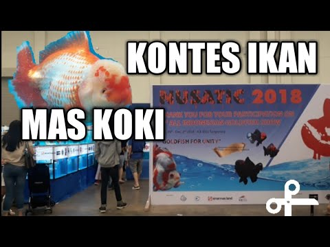 Ikan Mas Koki...GOLD FISH Contest, NUSATIC 2018