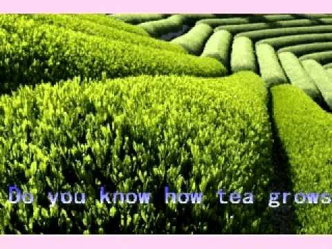 green tea caffeine.avi