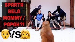 Video MOMMY DAN PAPAH DISERANG ORANG JAHAT!! MP3, 3GP, MP4, WEBM, AVI, FLV Februari 2019