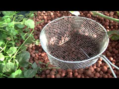 Adding Worms to Your Aquaponic Grow Beds