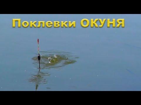 когда ловить окуня весной на поплавочную удочку