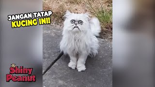 Video Serem Tapi Gemes? Inilah Kucing Paling Viral Saat Ini MP3, 3GP, MP4, WEBM, AVI, FLV Desember 2018