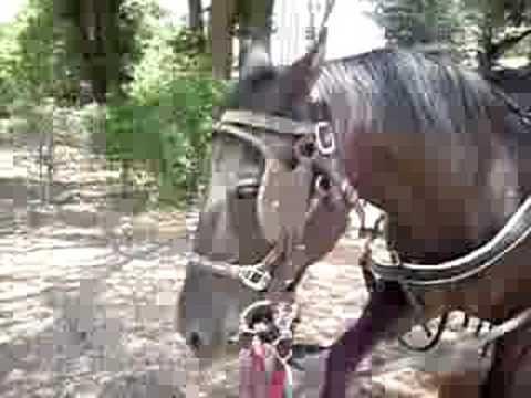 Restless Horse in Payson, AZ