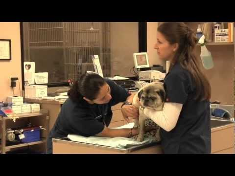 Advanced Veterinary Care Center - About Us