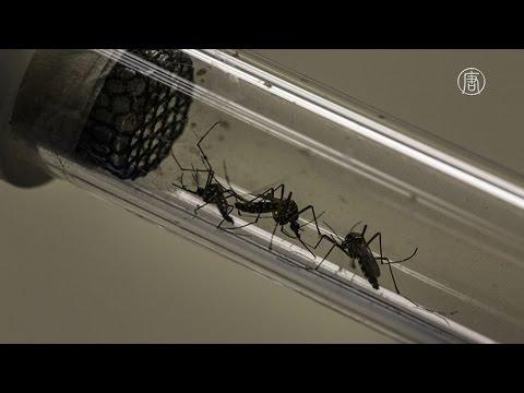 Новое средство поможет отпугивать комаров и победить Зику (новости)