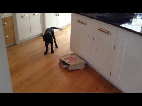 Priceless Puppy Reaction (Viral Video) - What's in that.... Oh shi.... - Pu