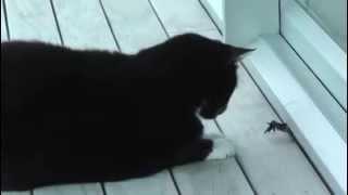 Жестокий бой кота