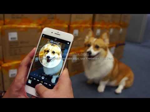 iPhone 8 Plus拍毛小孩 人像模式難偵測