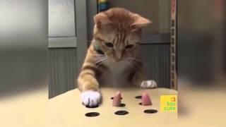 Video Beste lustige Katzen und Hunde 2018. Katze schlägt fehl, Hund nicht. Lustige Haustiere . MP3, 3GP, MP4, WEBM, AVI, FLV Juli 2018