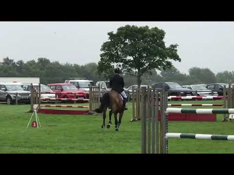 Quality FZ showjumping