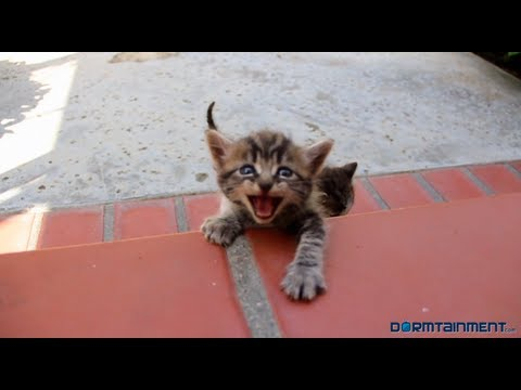 chat - What would a Jamaican kitty and a Red Neck kitty sound like if they could talk?