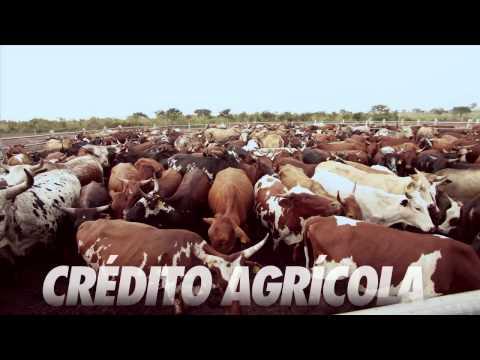 Angola cresce mais no campo