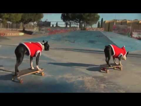 skateboarding Dogs Tuxedo & Neo : New Year Tricks