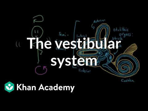 The Vestibular System Balance And Dizziness Video