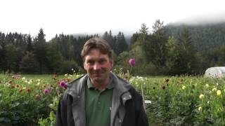 #802 Dahlienzüchtung - Peter Haslhofer im Gespräch