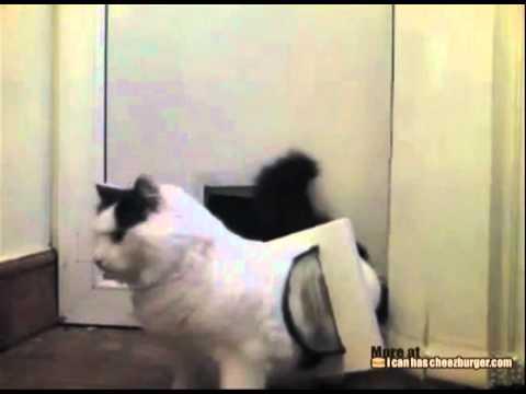 Gatto resta incastrato
