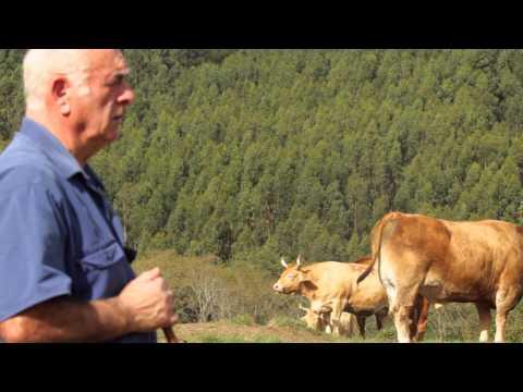 Carne de buey raza asturiana – Urduliz (Bizkaia)