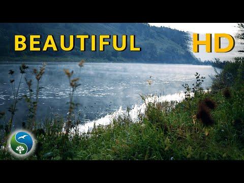 Утро на затоке звуки природы река пение птиц релакс природа медитация
