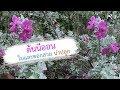 Download Lagu ต้นนีออนใบและดอกสวยน่าปลูก   เปิดโลกออนไลน์ Ep.101   Aranya Channel Mp3 Free