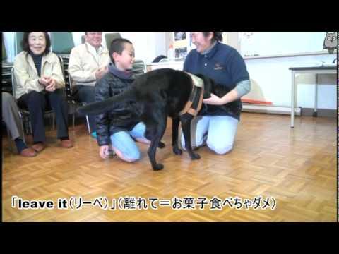 介助犬との交流学習〜豊島区立池袋第三小学校5年生の授業