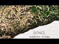 Tekst piosenki Garrison Starr - Bones