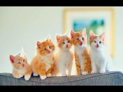 Уши, лапы и хвосты: сегодня отмечается Всемирный день кошек