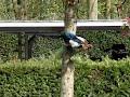 ekster vliegt weg uit boom