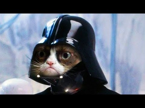 Cats And Kittens Meowing Song - Star Wars Imperial March