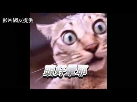 超萌貓咪旋轉 表情超到位!