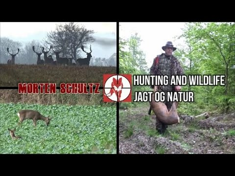 Hunting In Denmark. Wildlife, Firearms And Nature.