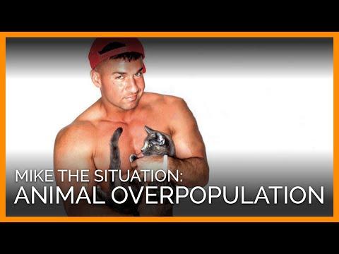 Help End Animal Overpopulation (PETA Ad)