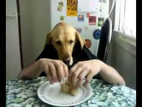 Kutya eszik