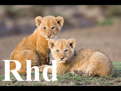 Lion's pride Here,  (Part 3 ) Nature 2018 HD  Documentary.