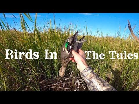 Marsh Duck Hunt -Channel Name Change!