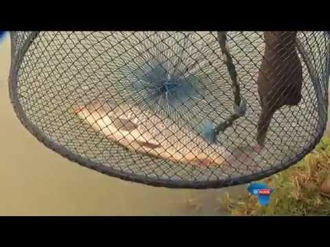 """""""Inheemse visse belangrik vir ekostelsel"""" / """"Indigenous fish vital for ecosystem"""""""