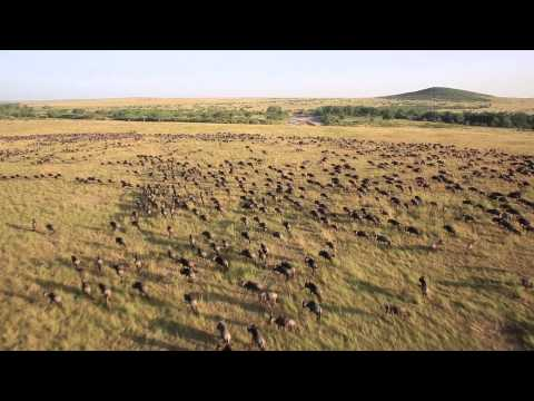 Waltz of the Wildebeest at Sala's Camp