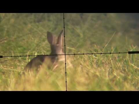 Devon AirGunner June Air Rifle Rabbit Hunt Weihrauch HW100 Scopecam