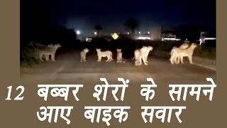 At least 12 lions were spotted at Gujarat's Pipavav Road in Amreli district where they were seen crossing the highway. In the video, which has now gone viral, we ...