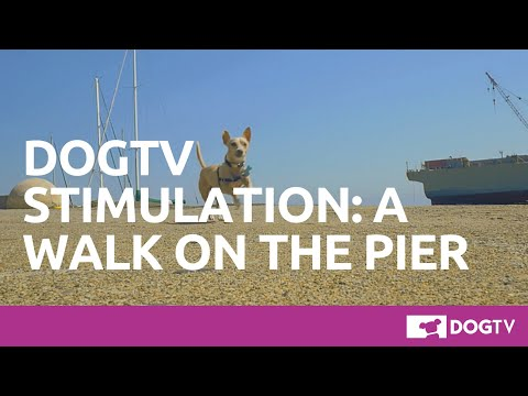 Video DOGTV Stimulation: a walk at the pier download in MP3, 3GP, MP4, WEBM, AVI, FLV January 2017