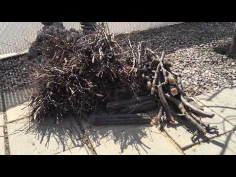 New yard update on pruning