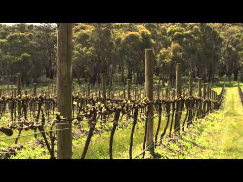 Discover wines, wineries and vineyards in the Mornington Peninsula