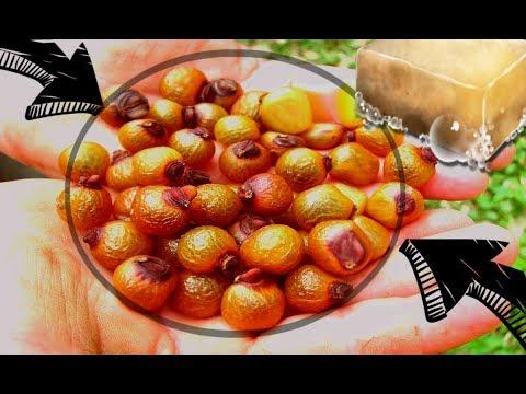 El cedro un rbol muy longevo plantas - Como plantar frutales ...
