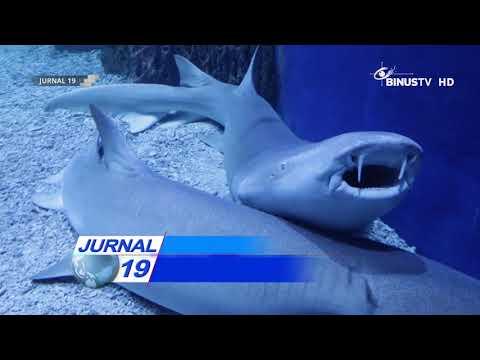 [Liputan] Melihat Pemandangan Bawah Laut di Jakarta Aquarium