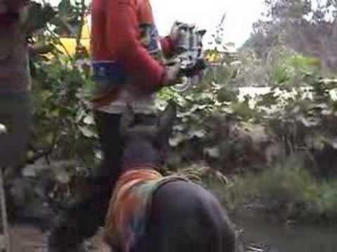 Viringo, el perro peruano calato