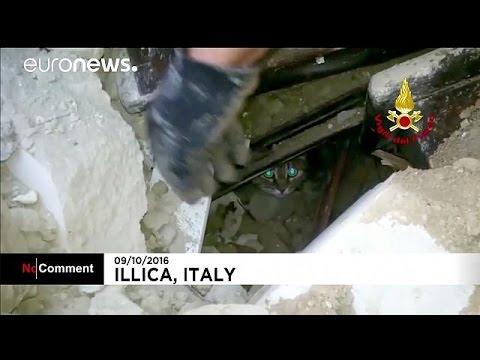 Ιταλία: Δύο γάτες βρέθηκαν ζωντανές στα ερείπια που άφησε πίσω του ο σεισμός