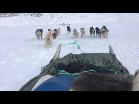 Sled riding in Greenland! Amazing experience